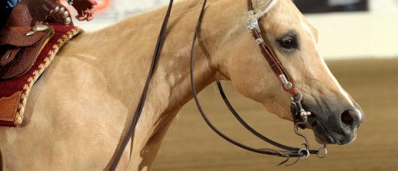 Salone_del_cavallo_americano